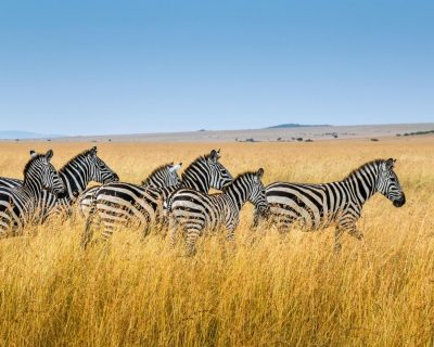 Wildlife Photo Safaris Deluxetargets