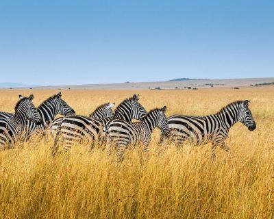 Wildlife Photo Safaris Deluxetargets